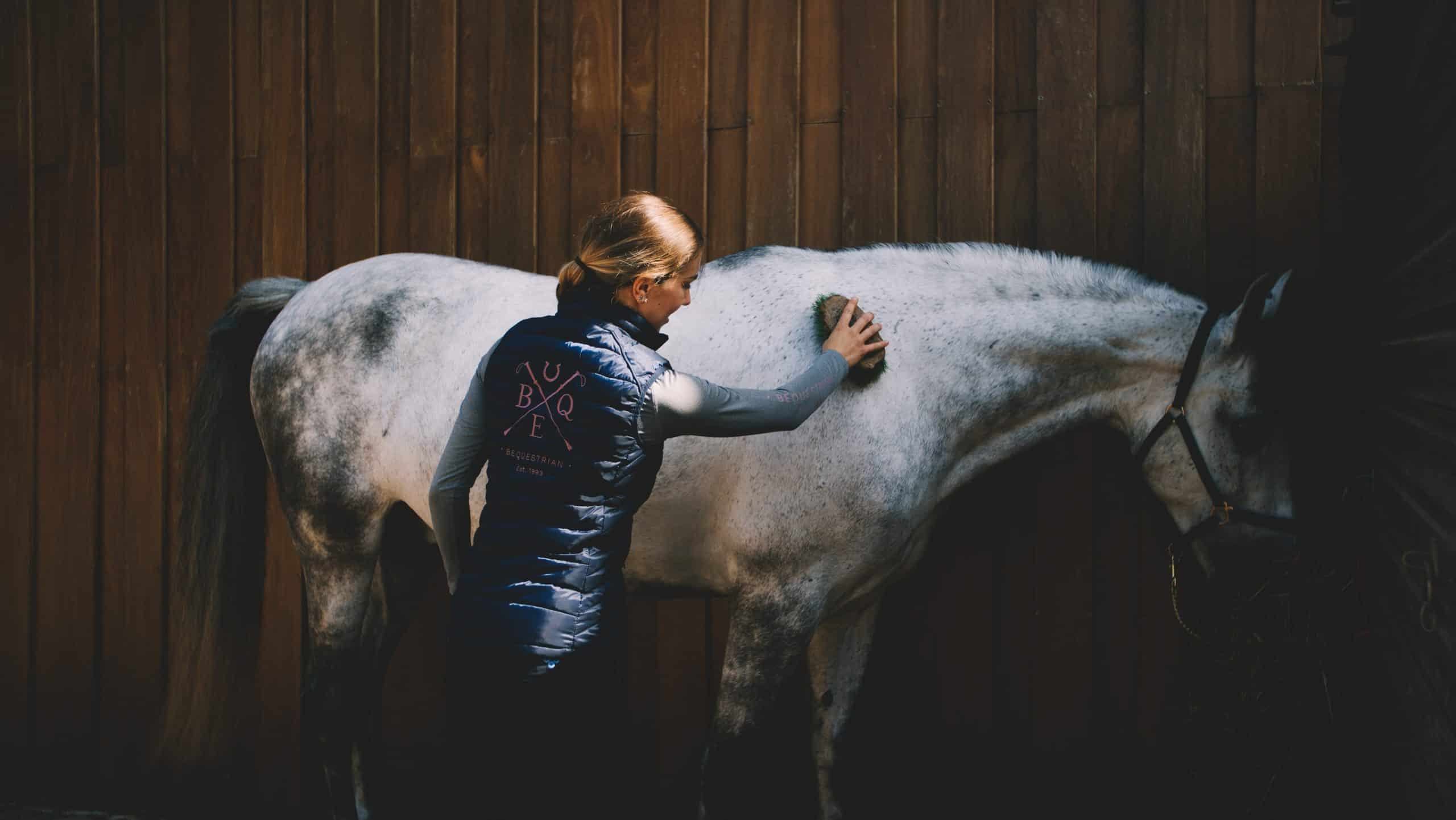 Header Image - Woman Brushes Horse down with equestrian brush